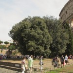 Fundament des Nero-Koloss'